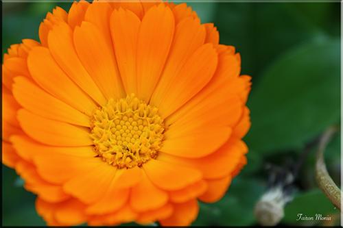 Photo de fleur en Ardenne 10