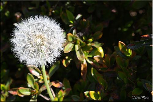 Photo de fleur en Ardenne 2