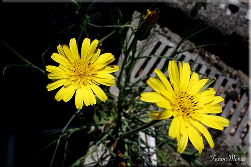 Photo de fleur en Ardenne 19