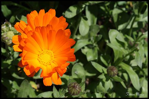 Photo de fleur en Ardenne 13