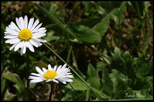 Photo de fleur en Ardenne 1