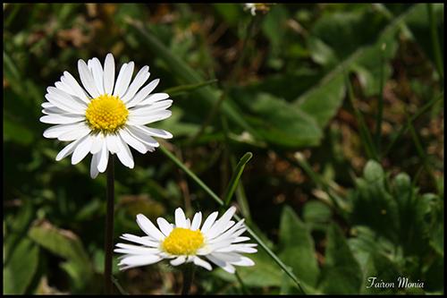 Photo de fleur en Ardenne 8