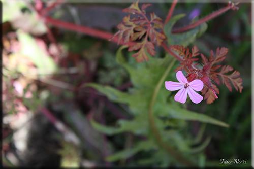 Photo de fleur en Ardenne 14