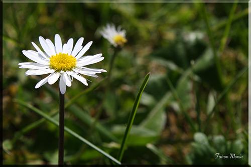 Photo de fleur en Ardenne 9