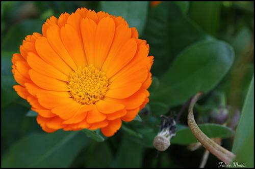Photo de fleur en Ardenne 3