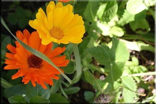 Photo de fleur en Ardenne 18