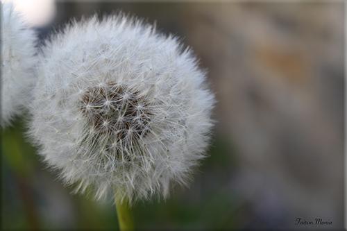 Photo de fleur en Ardenne 7