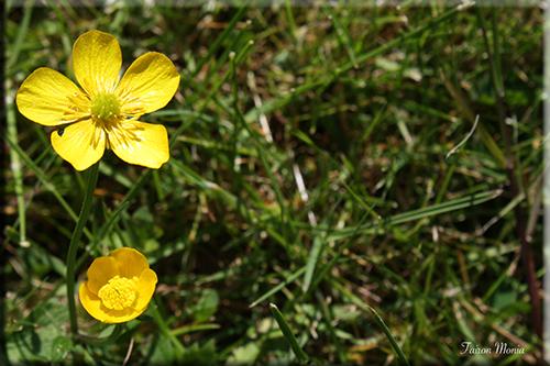 Photo de fleur en Ardenne 16