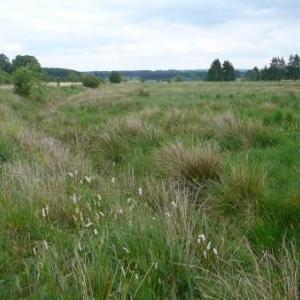 Sourbrodt : la Reserve de la Fagne de la Roer