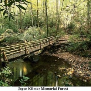 Joyce Klmer Memorial Forest - (c) North Carolina Tourism Office