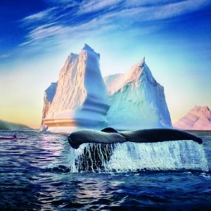 Baleine et Iceberg 2000 - (c) Terre Neuve et Labrador Tourisme