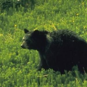 (c) Terre Neuve et Labrador Tourisme