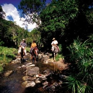 Chevaux dans la Rivière - (c) Nouvelle Caledonie Point Sud