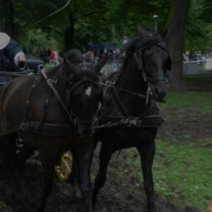 """Journée """"à pied, à cheval, à vélo"""" dans le centre de Liège"""