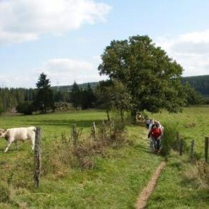 on traverse les prairies de Taverneux