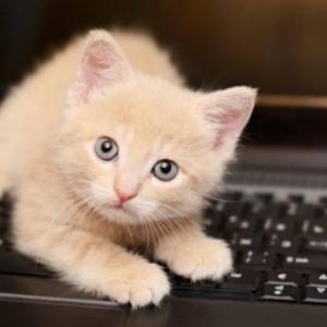 Mon petit chat aime se coucher sur le clavier...