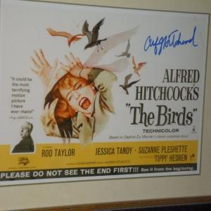 """Aficche du film """"Les Oiseaux"""" d'Hitchcock"""