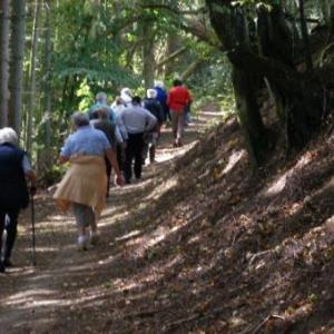 la voie Genin, intime, en sous-bois de sapins et feuillus
