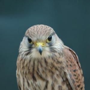 Falcon's Residence