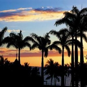 Soleil sur les palmiers - (c) Nouvelle Caledonie Point Sud