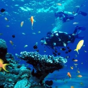 Les 7 raisons qui font de Malte une destination idéale pour la plongée