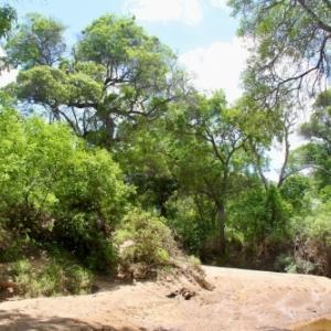 caatinga desert