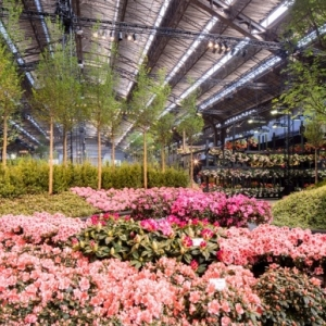 Floralienhal©Karin Borghouts