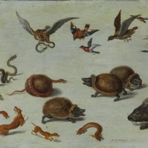 Les Ennemis des serpents, Jan I van Kessel (1626-1679),Gray, musée Baron Martin © cliché Studio Bernardot