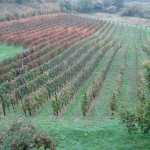 plesivica wijnroute
