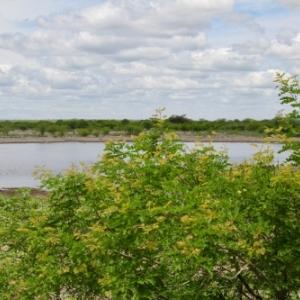 Historique! 20 ans après leur extinction complète dans la nature, les Aras de Spix sont de retour au Brésil
