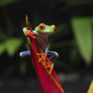 """Costa Rica, la Fievre verte"", par Alain Basset"