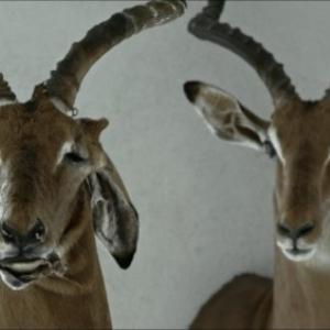 """Animus Animalis"" (Aiste Zegulyt), Grand-Prix europeen ""Director s Week"""
