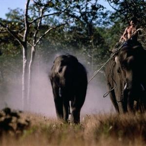 Des Mnongs capturant un Elephant