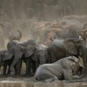 Afrique extraordinaire - Tanguy Dumortier