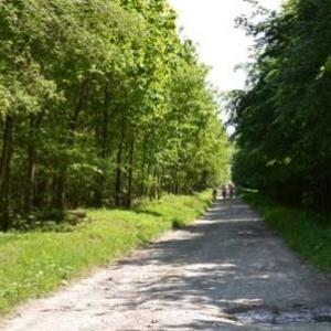 chemin entre feuillus et sapins