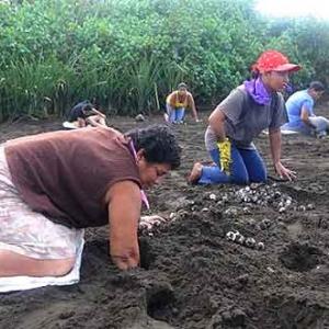 Extinction de la tortue de mer au COSTA RICA-16