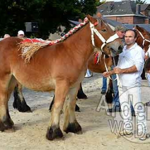 Cheval de trait ardennais-477