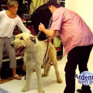 le plus grand chien du monde - video 04