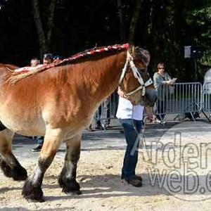 Cheval de trait ardennais-491