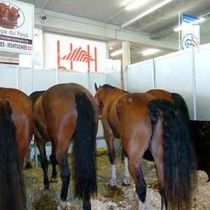 Foire agricole de Libramont - 579