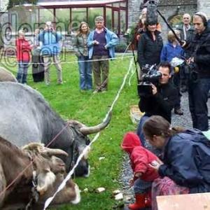 Elise Nijs : fete de la vache Durbuy 2008