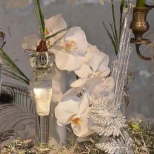 orchidee-5416