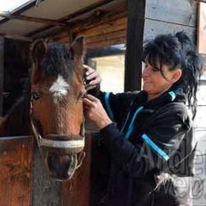 Le bien-etre du cheval
