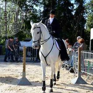 Cheval de trait ardennais-497