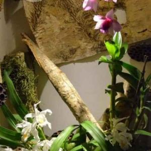 orchidee-5359
