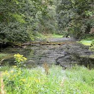 Canal de Bernistap - 8950
