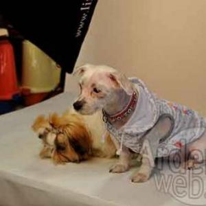 le plus beau chien du monde - 062