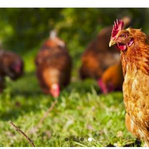 Graine d'AGRI, site didactique pour découvrir l'agriculture