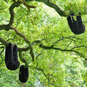Une colonie de paresseux en fourrure noire. 2018 © Elodie Antoine