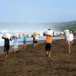 Extinction de la tortue de mer au COSTA RICA-19